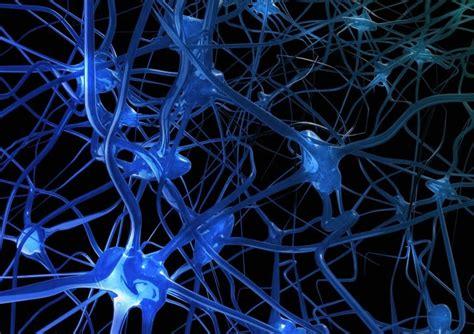 imagenes sensoriales olfativas concepto definici 243 n de sistema nervioso 187 concepto en definici 243 n abc