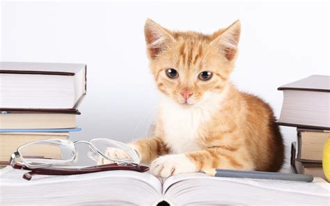 wallpaper cat book 2013 10 animals cats reading book wallpaper kittycat