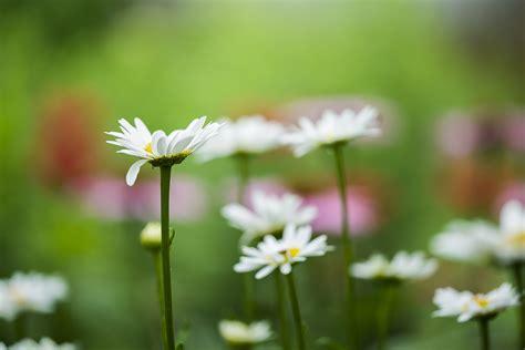 flower garden photography garden indiana photography