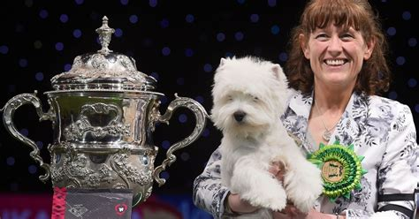 who won the show who won crufts 2016 here are all the winners from birmingham show birmingham live