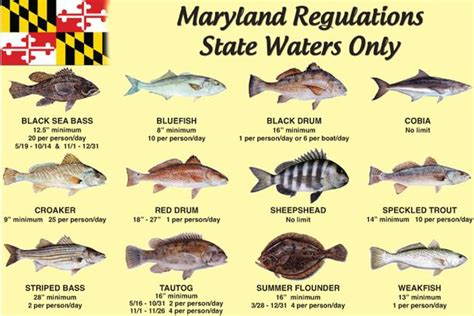 maryland boating license sportfishing and boating newspaper in ocean city maryland