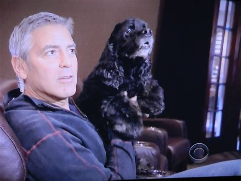 george s dogs a visit with george clooney