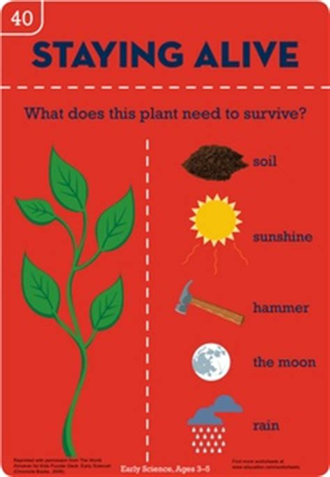 staying alive worksheets and botany on pinterest