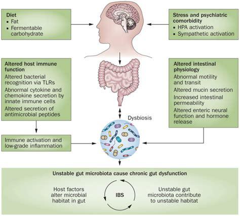 f prausnitzii supplement probiotics and prebiotics dssurgery