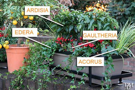 fioriere invernali il balcone d inverno verde e bello dal nord al sud