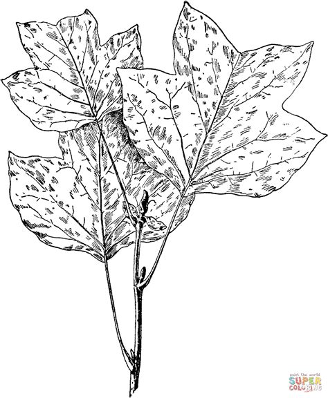 tree leaf coloring pages tulip tree leaves coloring page free printable coloring