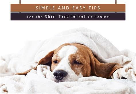 easy dogs to take care of simple and easy tips for the skin treatment of canine petcaresupplies