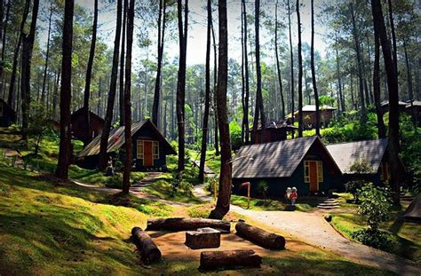 Grafika Cikole, Your Modern Way For Camping, Lembang