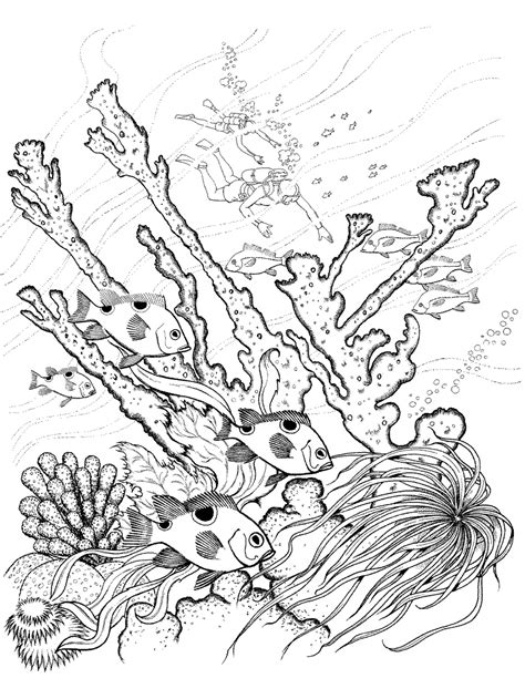 1000 ideas about ocean coloring pages on pinterest ocean coloring pages for adults