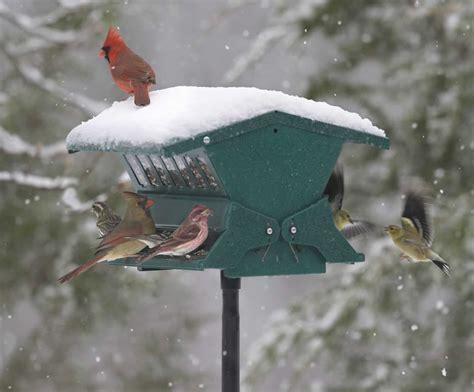 duncraft com absolute ii squirrel proof bird feeder