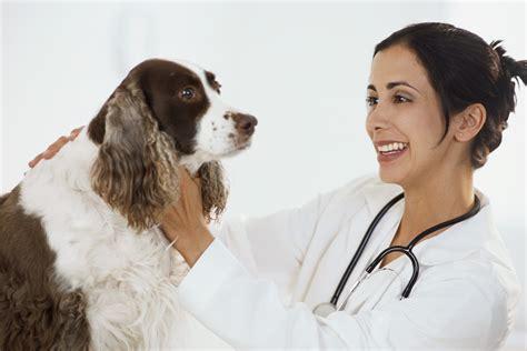 veterinary and animals veterinary doctors veterinary