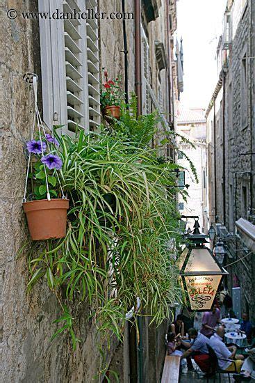 images  house plants  pinterest