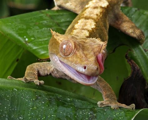 the best reptile pets for beginners