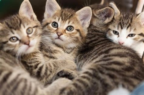 kastrierter kater markiert in der wohnung der grausame tod sieben katzen news z 252 rich
