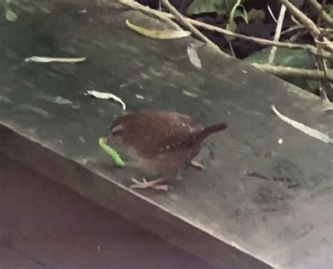 how to feed wrens over the winter milton keynes natural