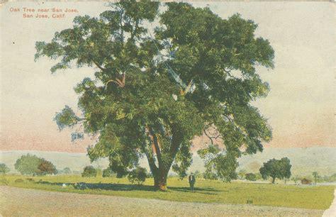 oak tree rubber st disrupt the tree bay nature medium
