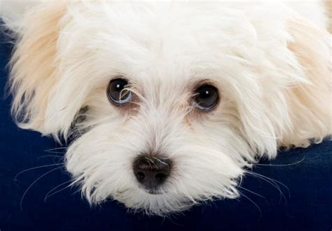puppy puppy puppy puppy explained by science news today