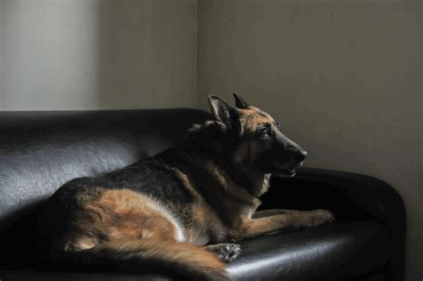 couch alarm for dogs photos