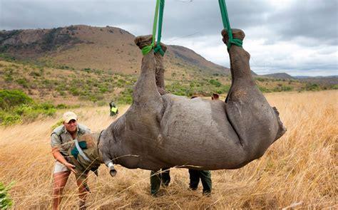 rhinos face extinction by 2020 wildlife experts warn al