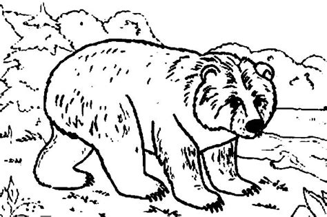 jungle bunch coloring pages hair bear bunch coloring pages coloring pages