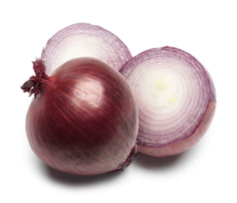 are onions toxic to dogs pets and onions