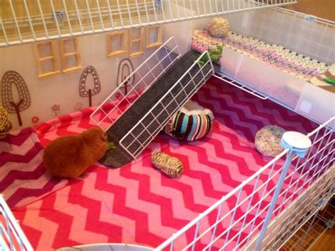 Guinea Pig Cage Shelf by 2x3 C And C Cage With Closet Shelf Lid And 1x3 Patio