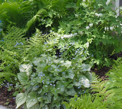 fern frost back yard biology 164 best shade gardens images on pinterest backyard