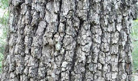boat us virginia test answers can you spot the huge snake camouflaged in this tree bark