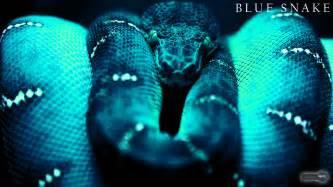 snake wallpapers animal spot
