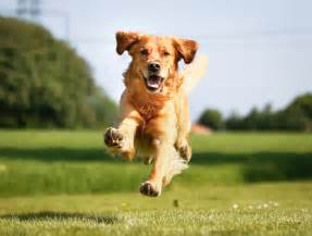Dogs Why Dogs Are Quot Anyone S Best Friend Quot