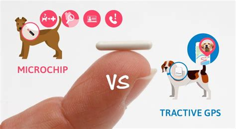 microchips for dogs microchip for dogs and tractive gps the differences tractive