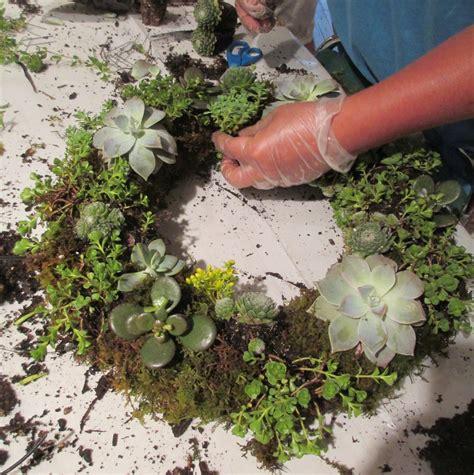 diy succulents diy project make a succulent wreath our fairfield home