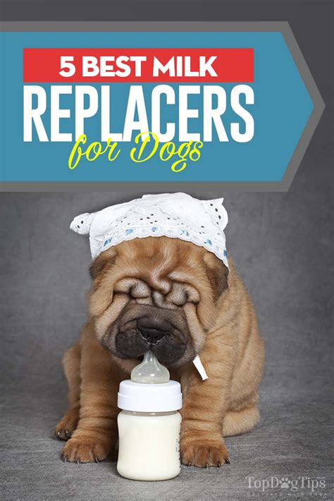 best puppy milk replacer top 5 best puppy milk replacer brands in 2018 enriched for growth