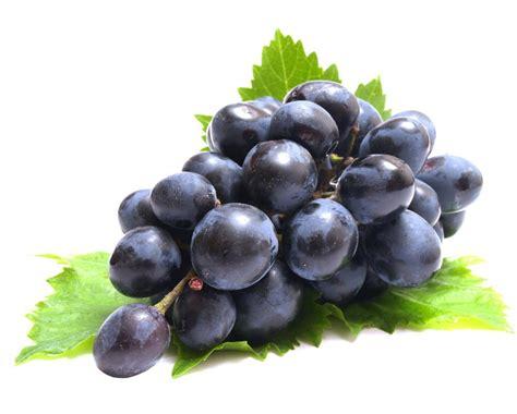 uvas silvestres imagenes mariajose uvas
