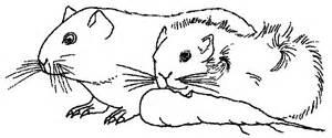 hamster meerschweinchen murmeltier