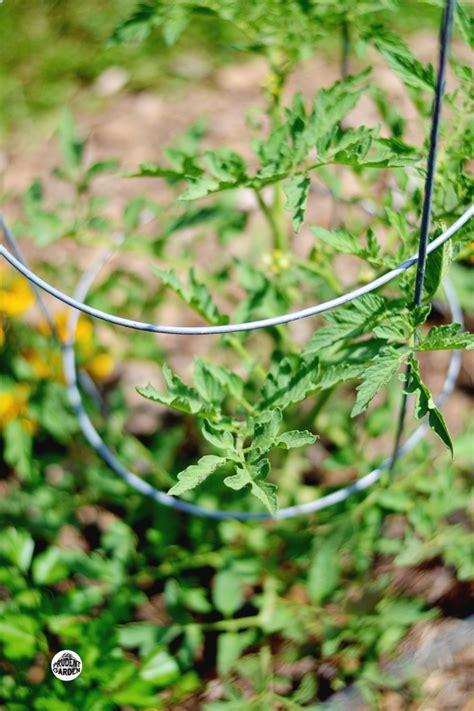 growing up vertical gardening