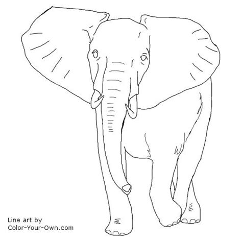 african elephant bull coloring page
