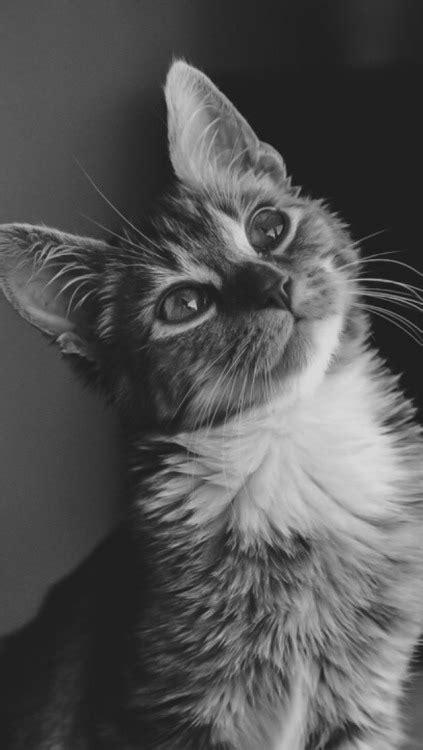 wallpaper tumblr cat cat lockscreens tumblr