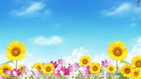 flower background summer flower backgrounds wallpapersafari