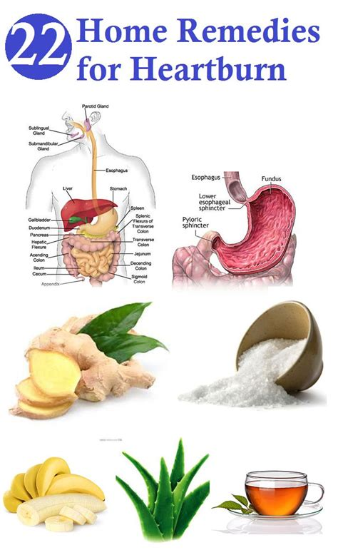 home remedies for heartburn health remedies and