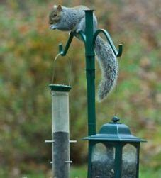 How To Keep Blackbirds Away From Bird Feeders how to keep away squirrels from your bird feeder