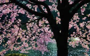 dari awal keindahan bunga muncul dari kuncup di awal musim
