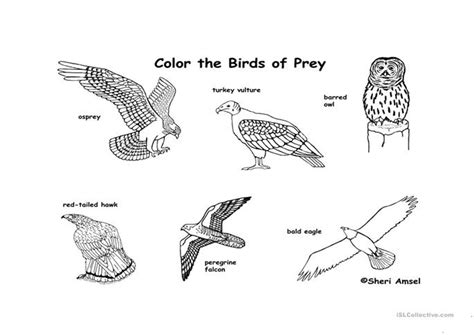 free coloring pages of birds of prey color the birds of prey worksheet free esl printable