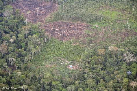 rainforest sections sections of rain forest cut for slash and burn agriculture