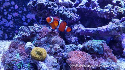 life  happy tropical plants  salt water fish