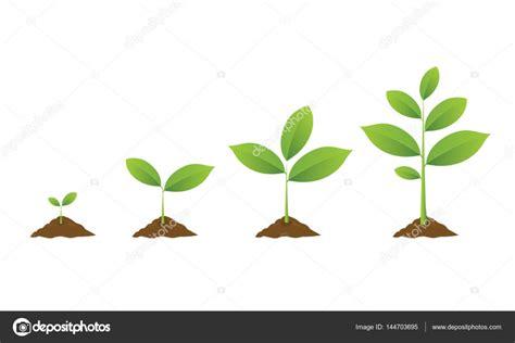 welchen baum im garten pflanzen 2792 welchen baum im garten pflanzen garten welchen baum