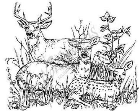 deer family coloring page northwoods rubber sts animals northwoods rubber st