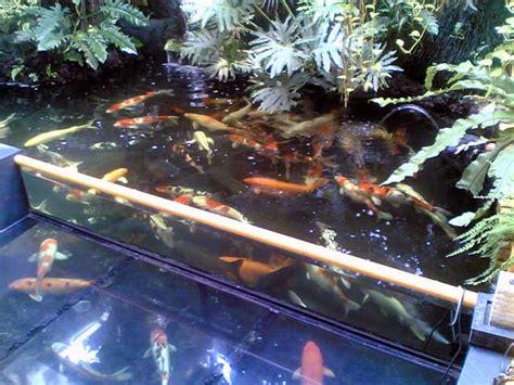 Pompa Aquarium Untuk Akuaponik tempatnya pecinta ikan hias 02 01 2012 03 01 2012