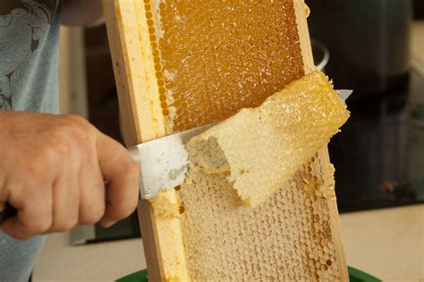 how to extract honey from a top bar hive apitherapy portland urban beekeepers
