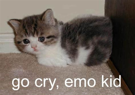 Crying Cat Meme - go cry emo kid cat meme cat planet cat planet